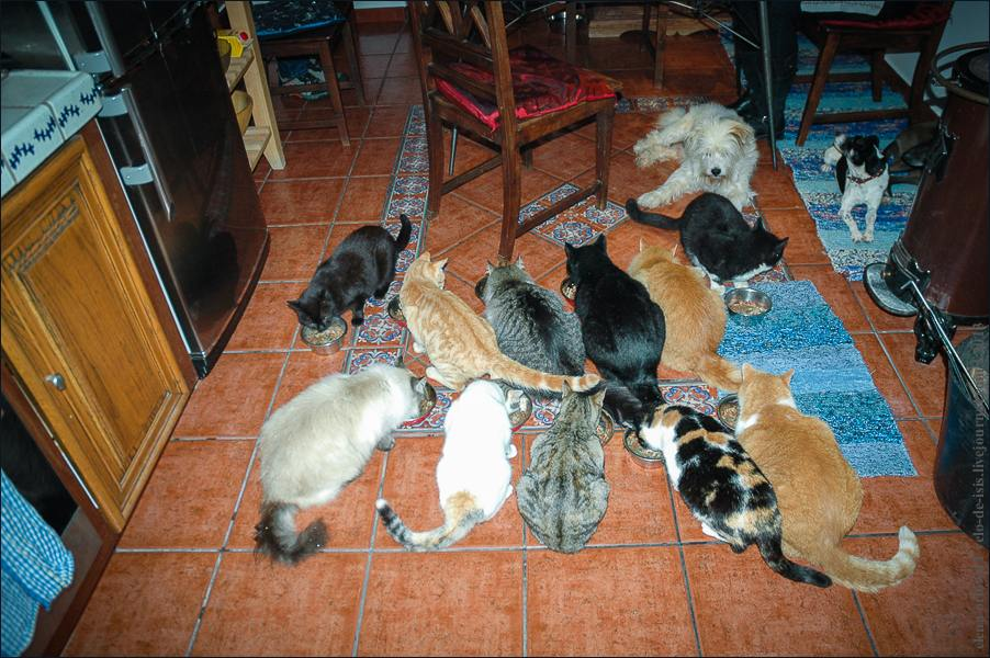 13_cats_and_dogs-0352