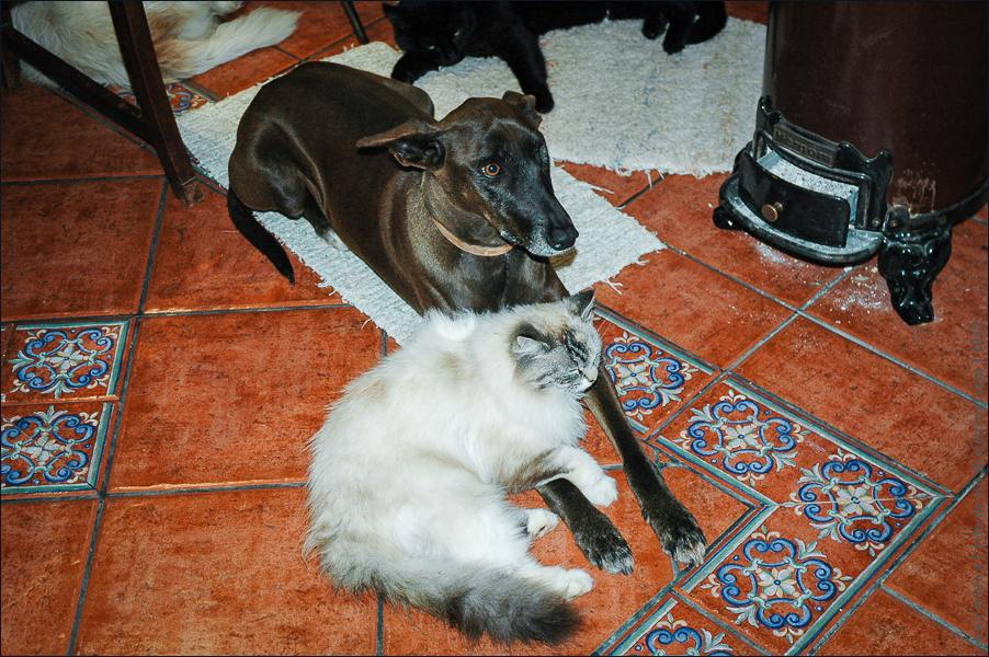 12_cats_and_dogs-0336