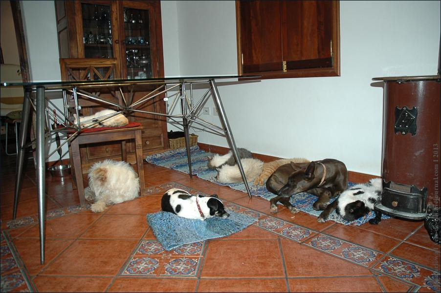 14_cats_and_dogs-0355