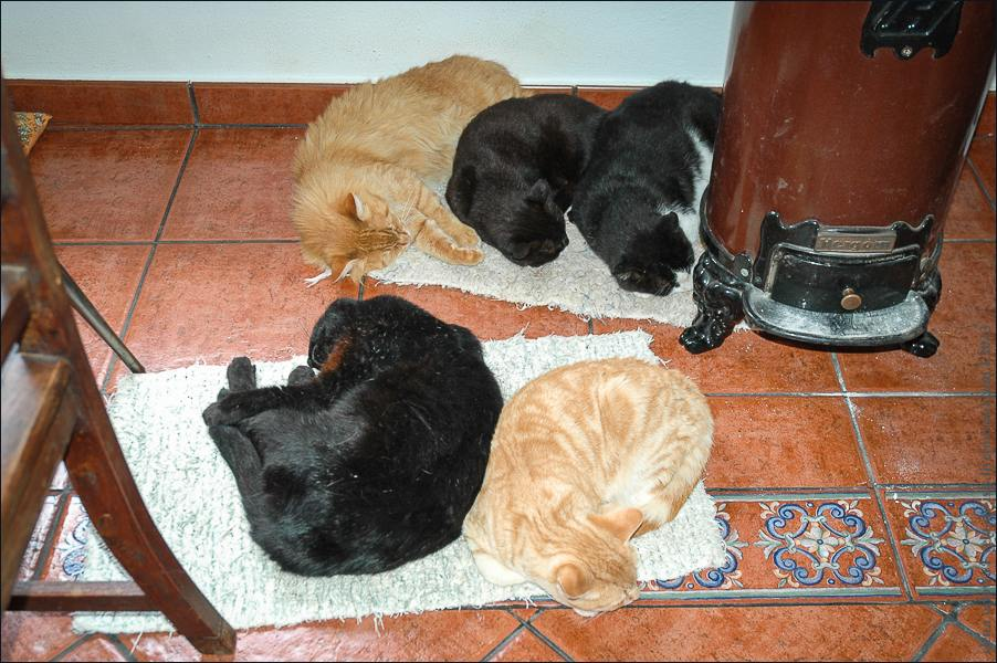 16_cats_and_dogs-0349