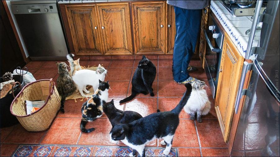 11_cats_and_dogs-07240