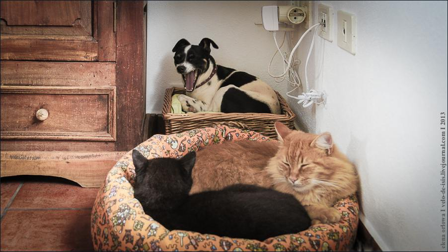 07_cats_and_dogs-07236