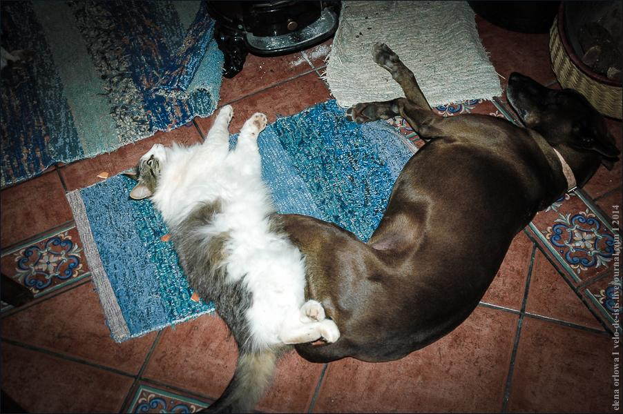 01.cats_and_dogs-0718