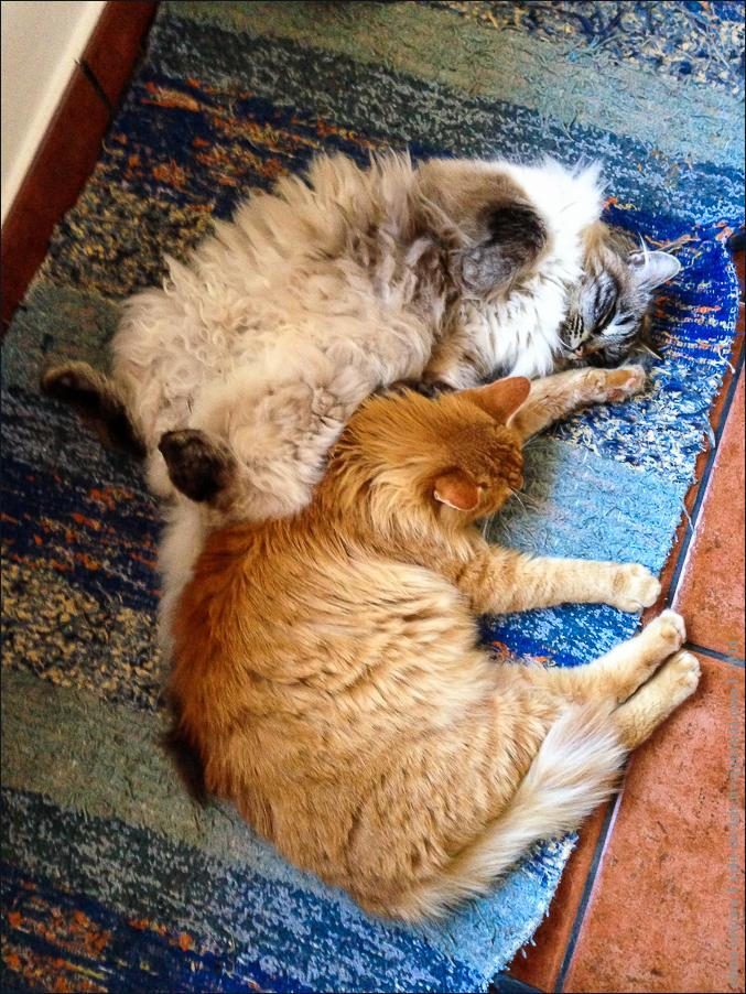 01.cats_and_dogs-2101