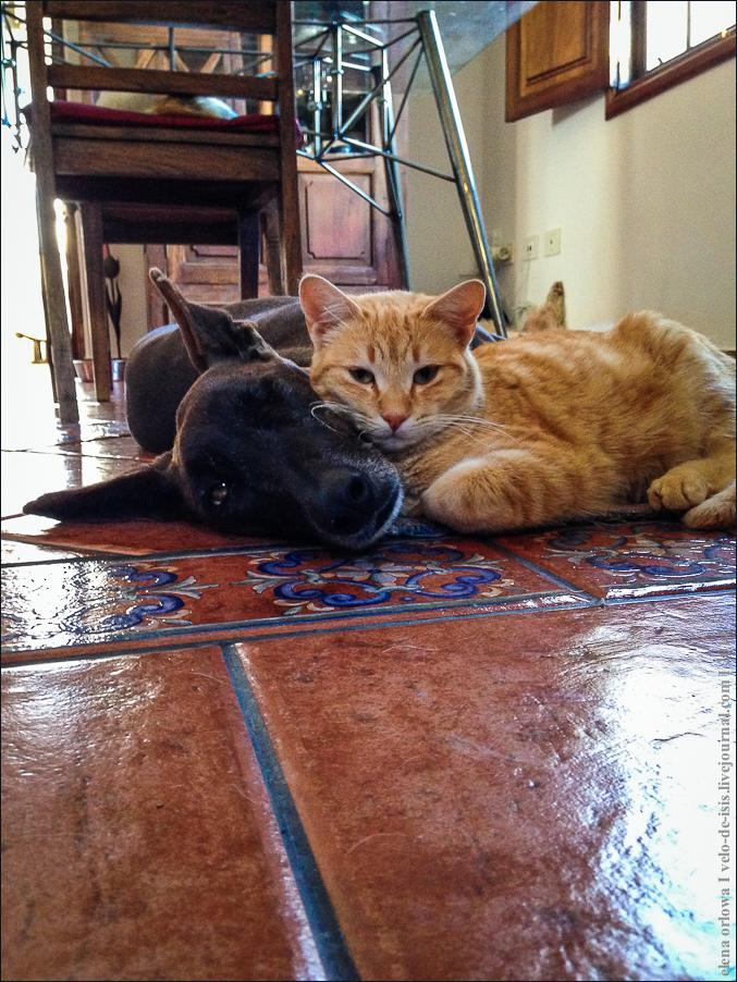 02.cats_and_dogs-2104