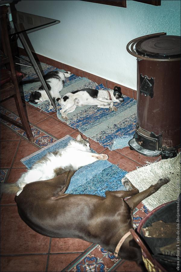 02.cats_and_dogs-0721