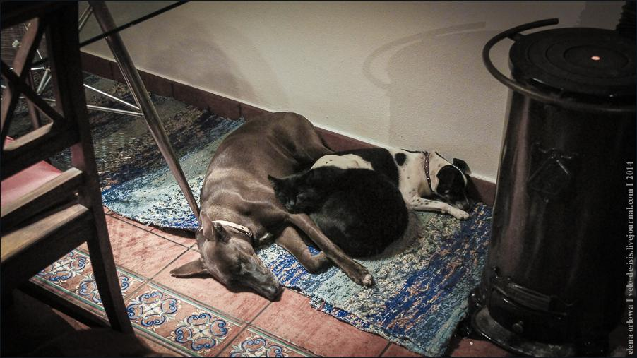 01.cats_and_dogs-07759