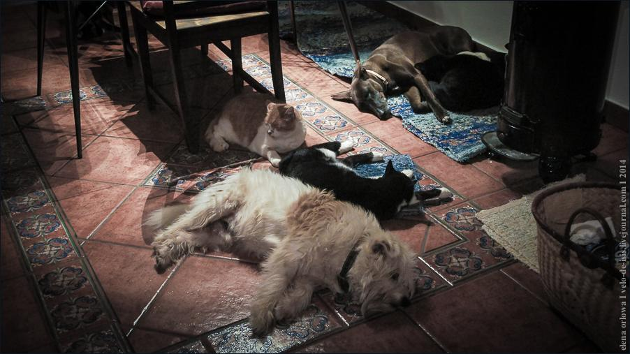 02.cats_and_dogs-07761