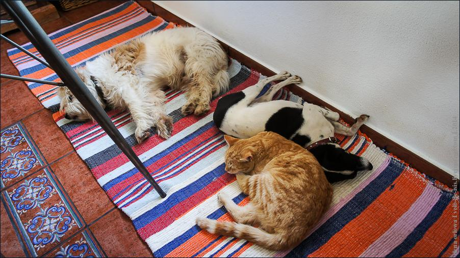 04.cats_and_dogs-08588
