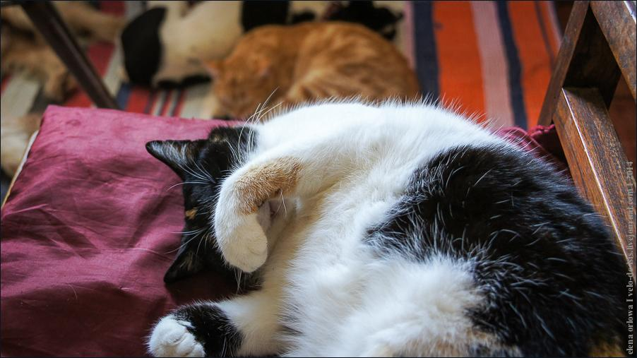 05.cats_and_dogs-08590