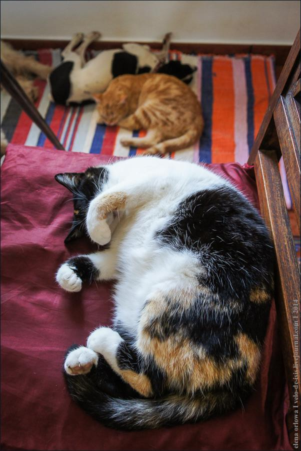 06.cats_and_dogs-08591