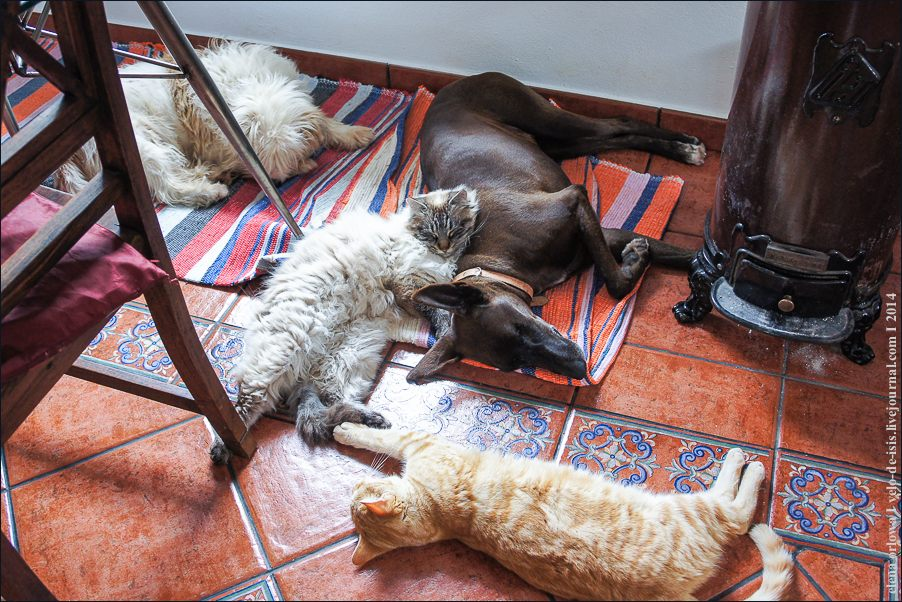 02.cats_and_dogs-08595