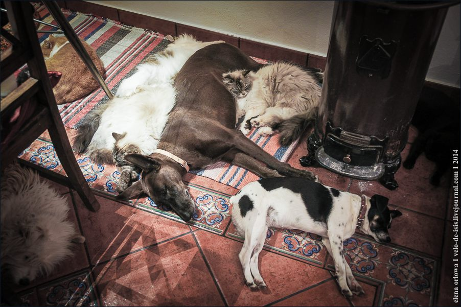 28.cats_and_dogs-09226