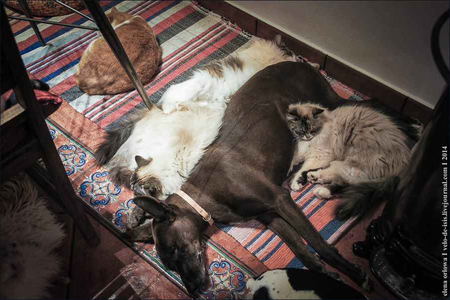 29.cats_and_dogs-09227