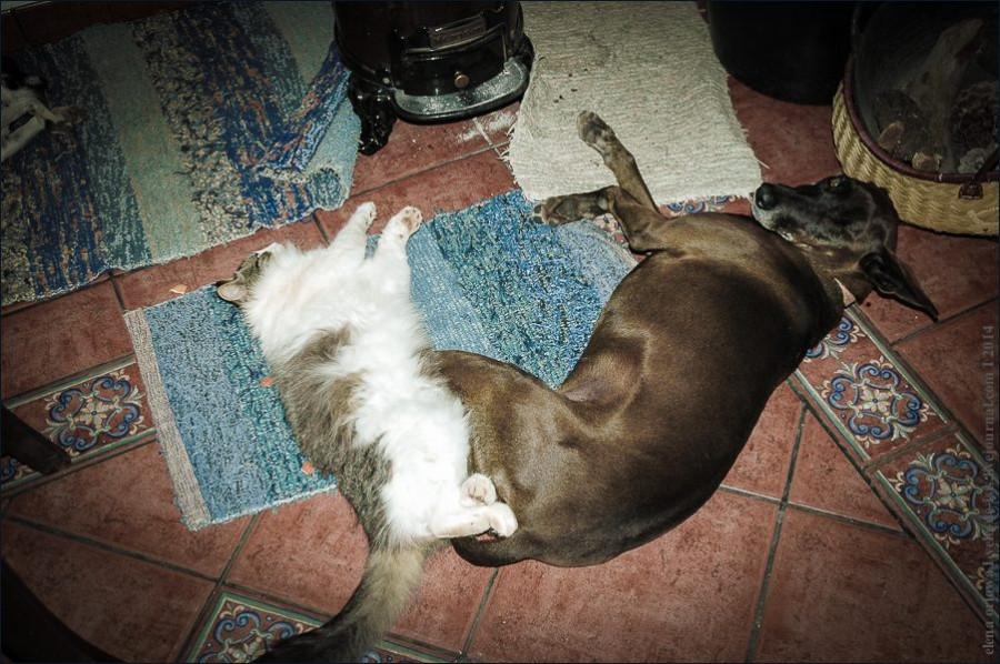 02.cаts_dogs-0719