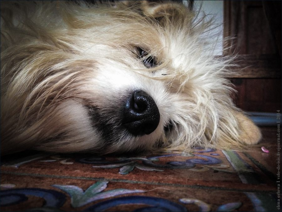 15.cаts_dogs-01