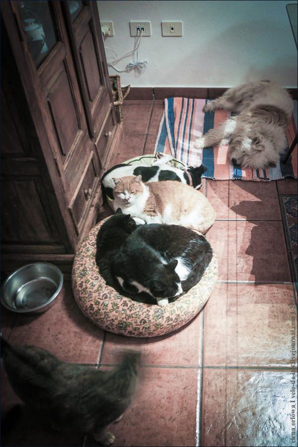24.cаts_dogs-01