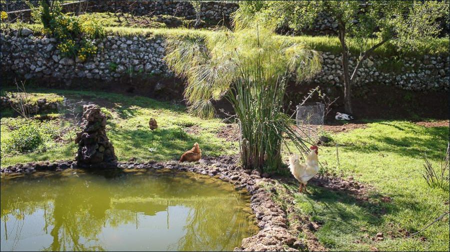 08.animales_villa_vinita-09918