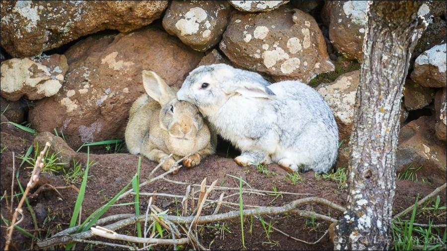 22.animales_villa_vinita-00051