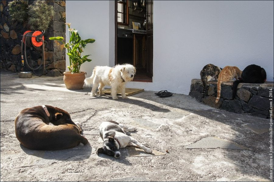cats_dogs-00237