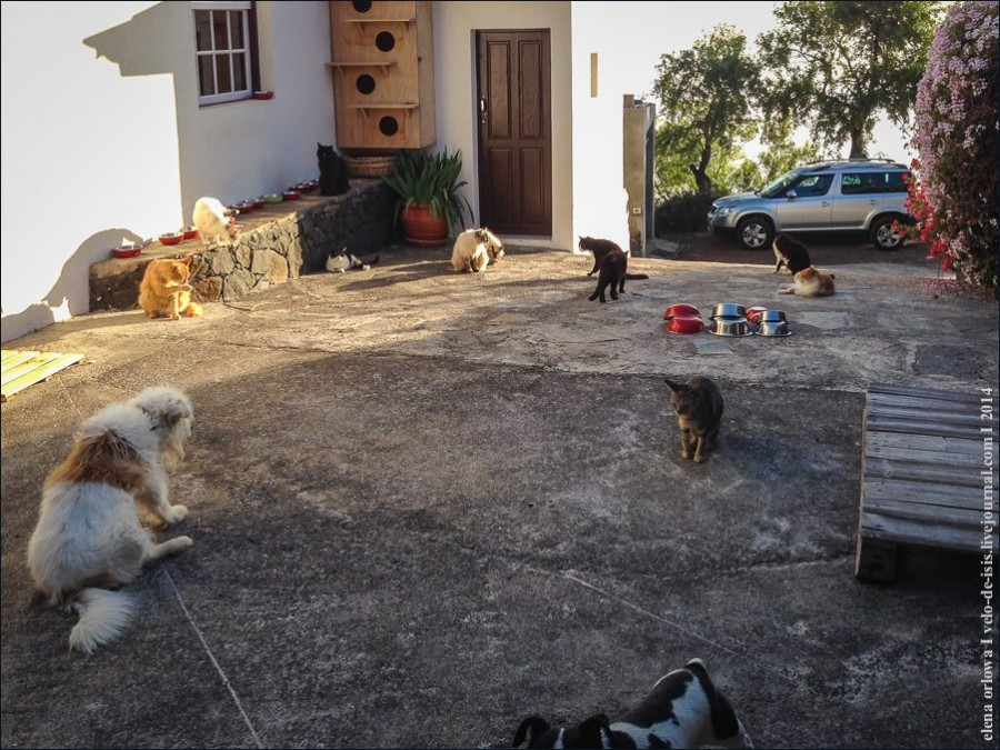cats_dogs-2665