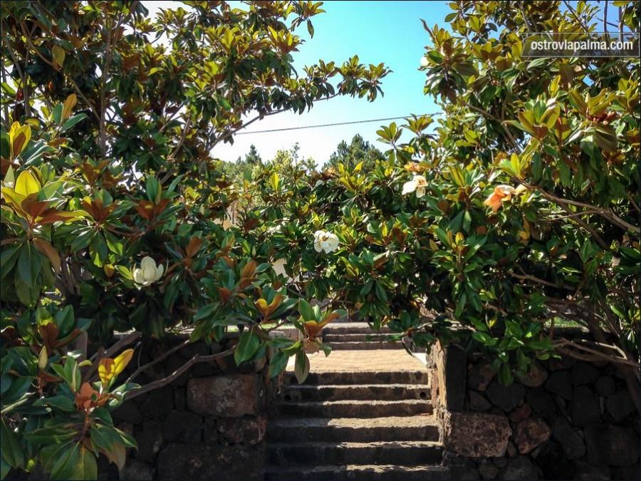 magnolia-2914
