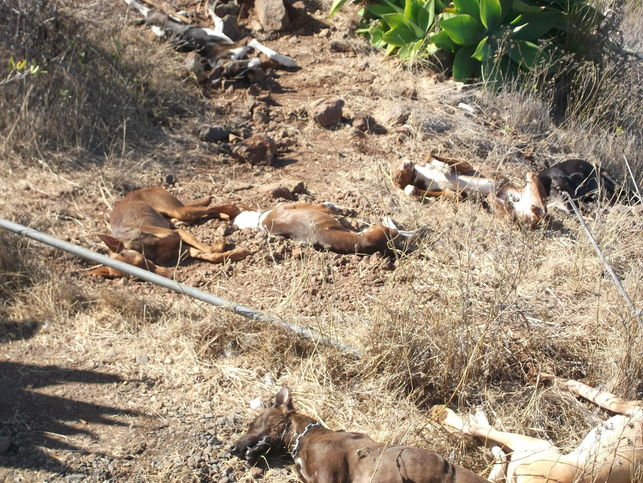 envenenamiento-perros_de_caza-El_Time_EDIIMA20140817_0241_14