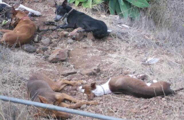 envenenamiento-perros_de_caza-El_Time_EDIIMA20140817_0243_13