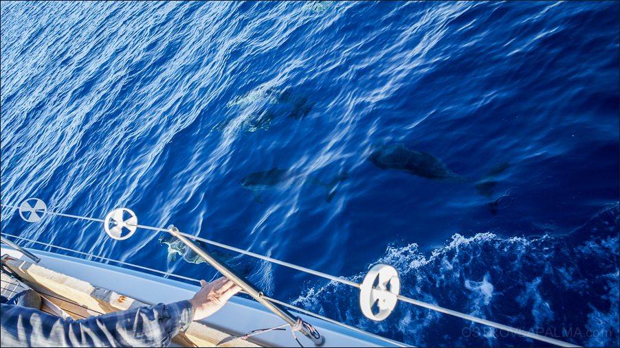 delfiny-03219