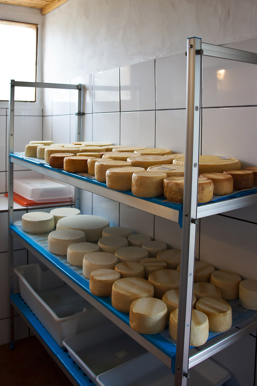 84.queso_doris-06990