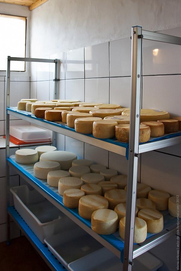 9.84.queso_doris-06990