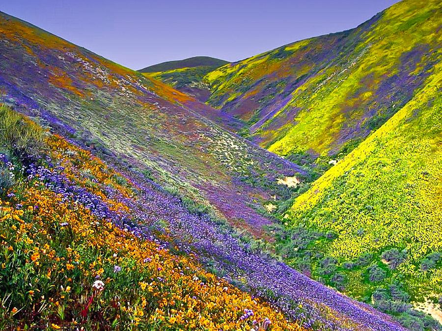dolina cvetov