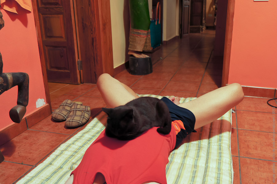 Йоги-кошка joga-09449