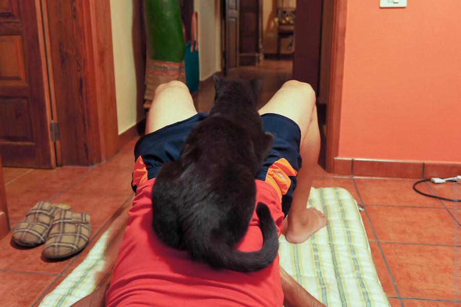 Йоги-кошка joga-09453