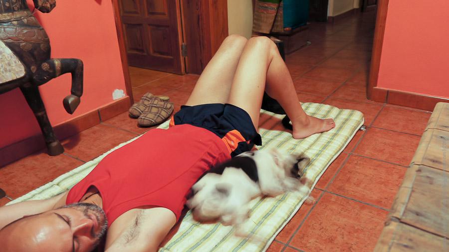 Йоги-кошка joga-09457