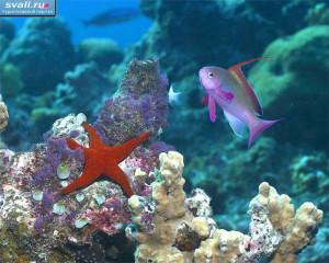 Большой Барьерный риф. Австралия.