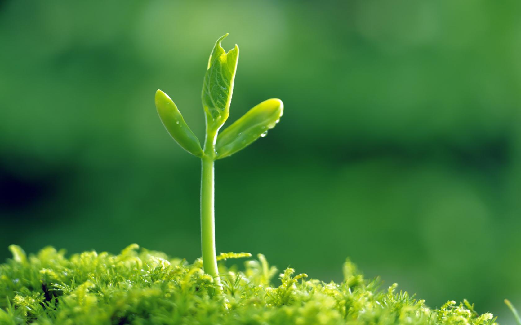 green-plants-60