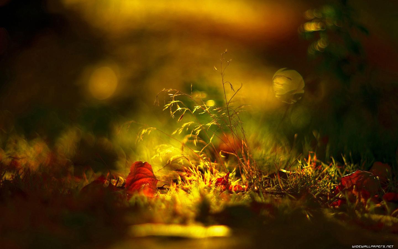 autumn-wallpaper-1440x900-037