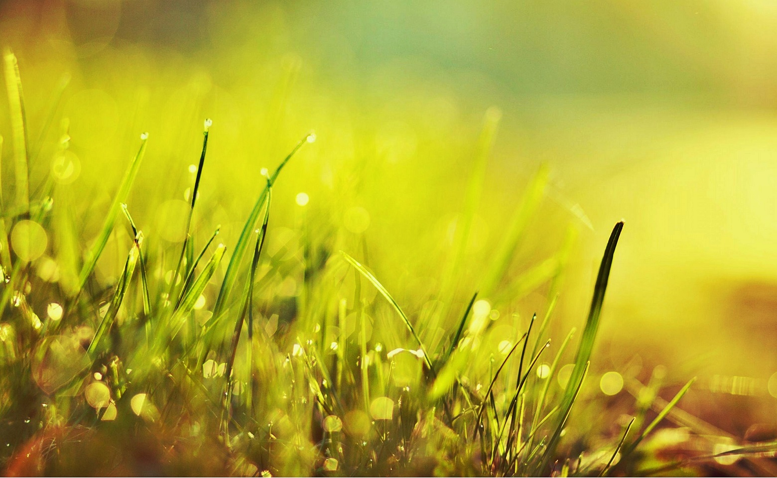 grass-morning-sunrise-drops-dew-nature-1920x2560