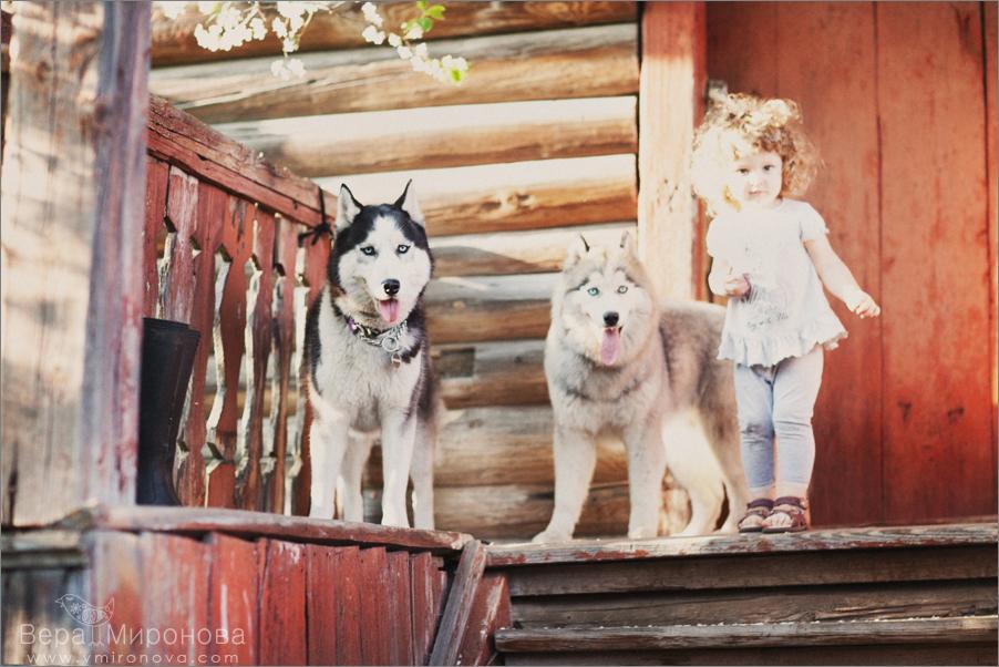 Детский и семейный фотограф Вера Миронова. Хаски
