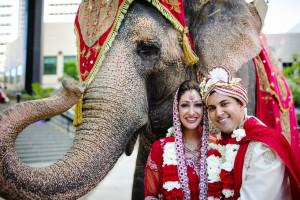 Elephant-in-Denver-Wedding-Baraat