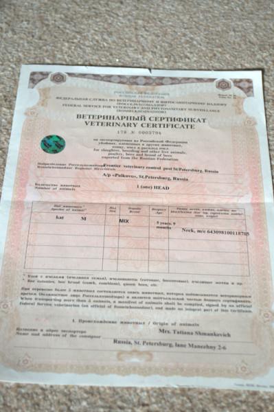 Справка для перевозки животных Молодежная как готовиться к анализу крови на афп и хгч