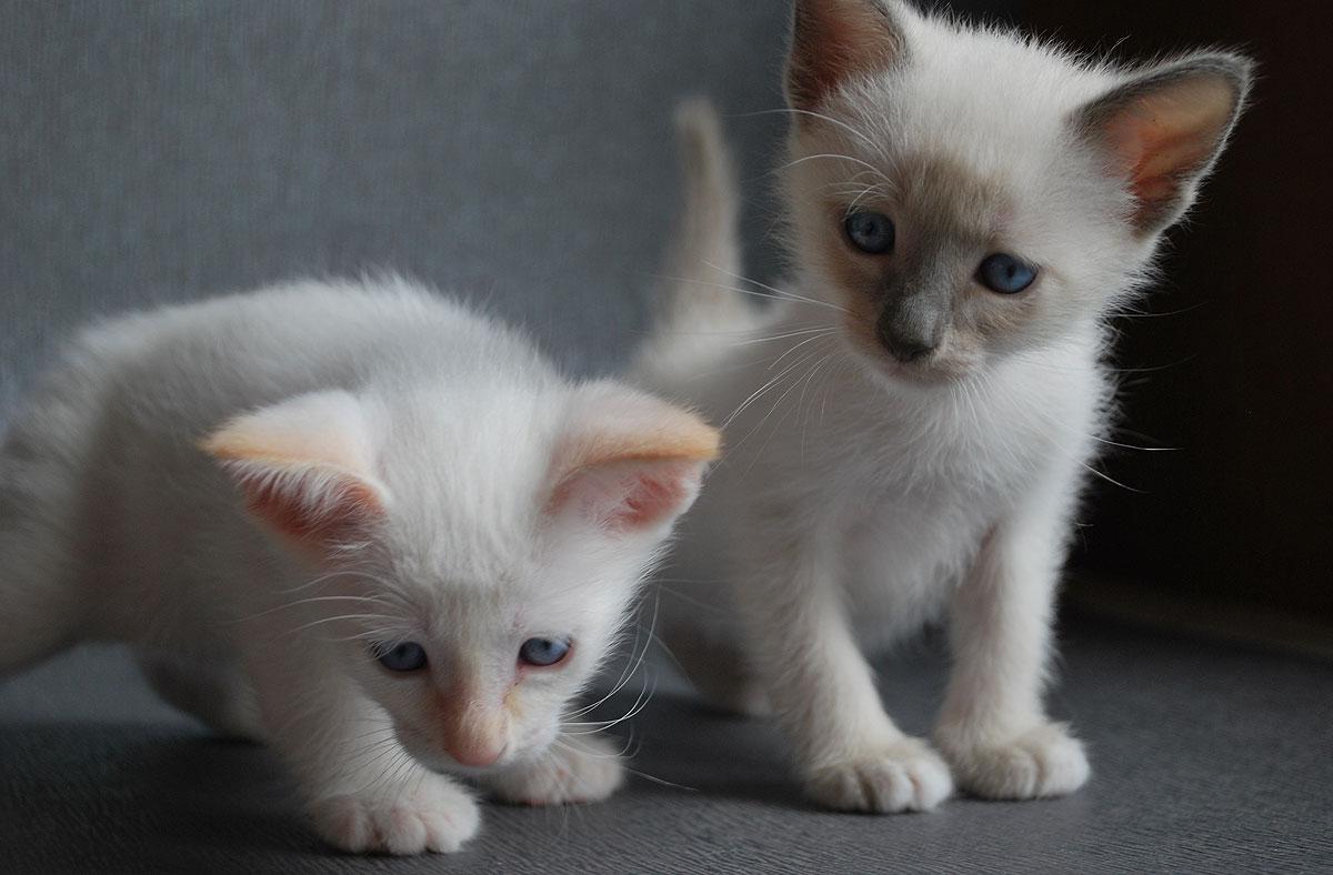 cats029