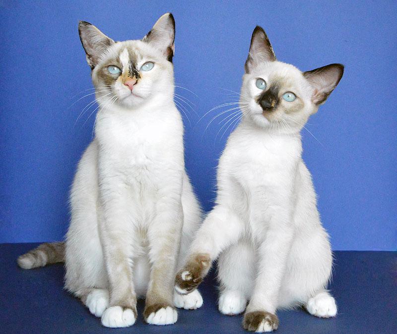 cats10_1