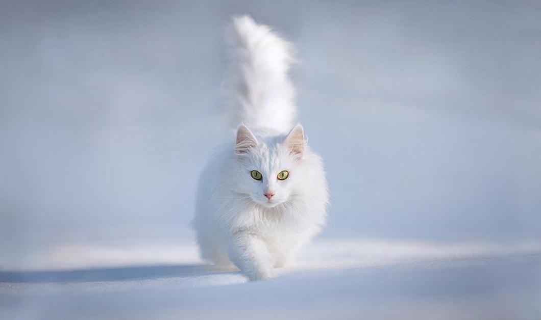 animals-in-winter-2