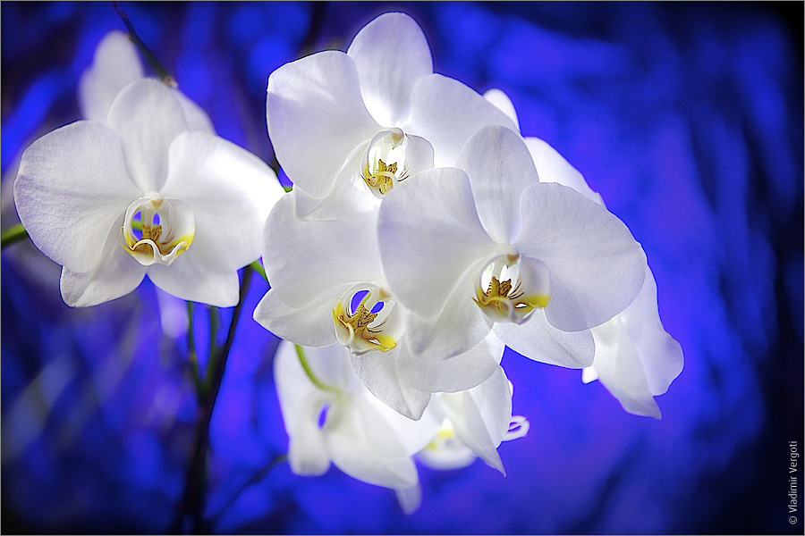 видим открытка с белыми орхидеями коттедж недорого верхотомском