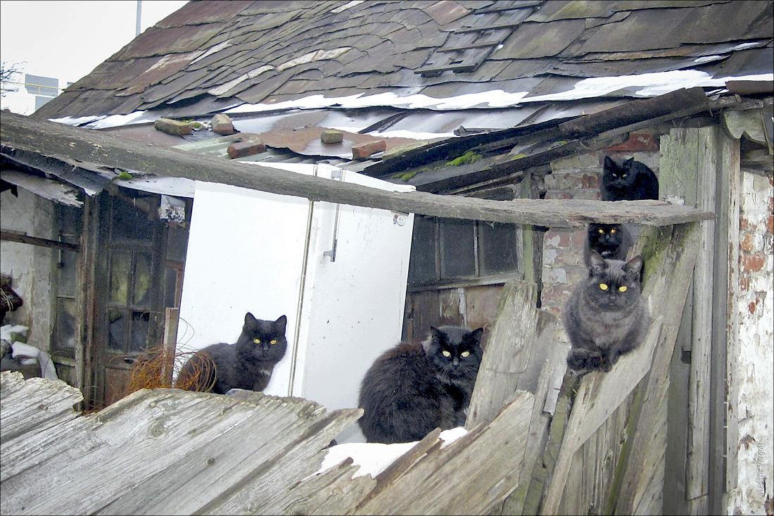 5 котов