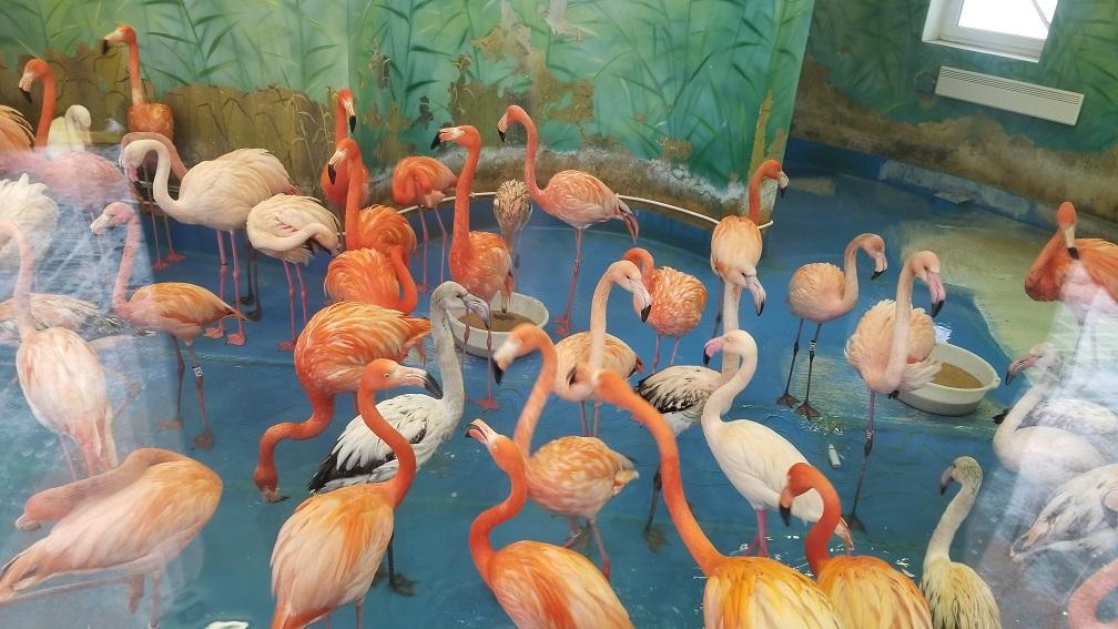 zoo01