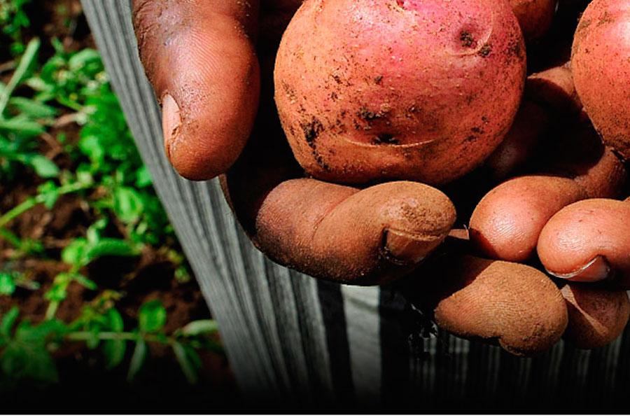 Будет ли расти картошка на Марсе? Яблони выращивать ,наверное, будет дима рогозин