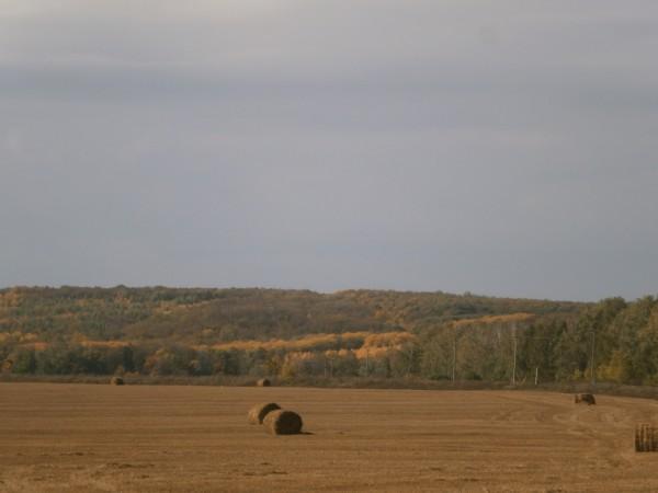 Малость осеннего леса Вам в ленту ))